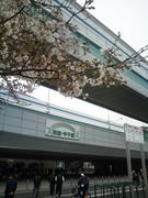 100328_甲子園 (5).JPG