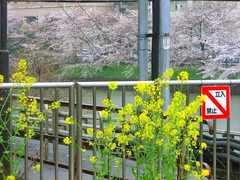 2013-03-30_市ヶ谷駅(桜) (2).jpg
