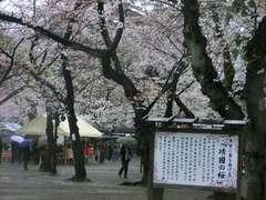 2013-03-30_靖国神社 (17).jpg