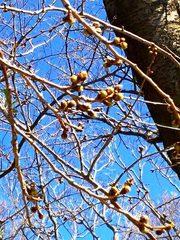2014-03-22_川崎市立緑が丘霊園の桜-2.jpg