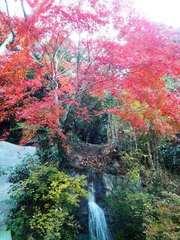 20141221_あたご滝 (4).jpg