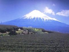 お茶畑のバックに富士山.jpg