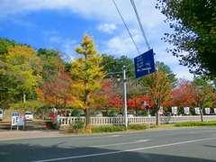 平塚八幡宮の紅葉.jpg