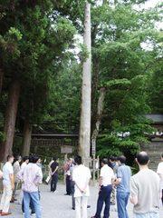 諏訪大社の巨木.jpg